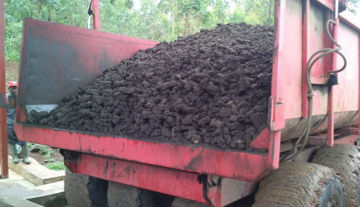 Peat raw material before briquetting