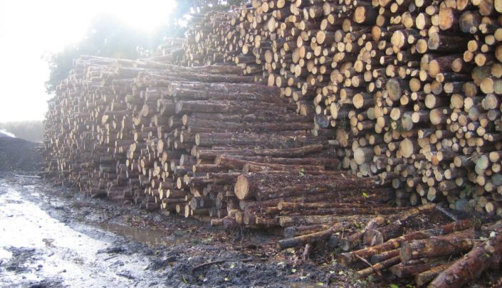 Logs ready for processing into shavings for bedding